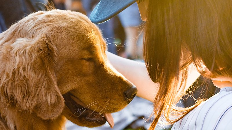 Dog helping woman feel less stressed