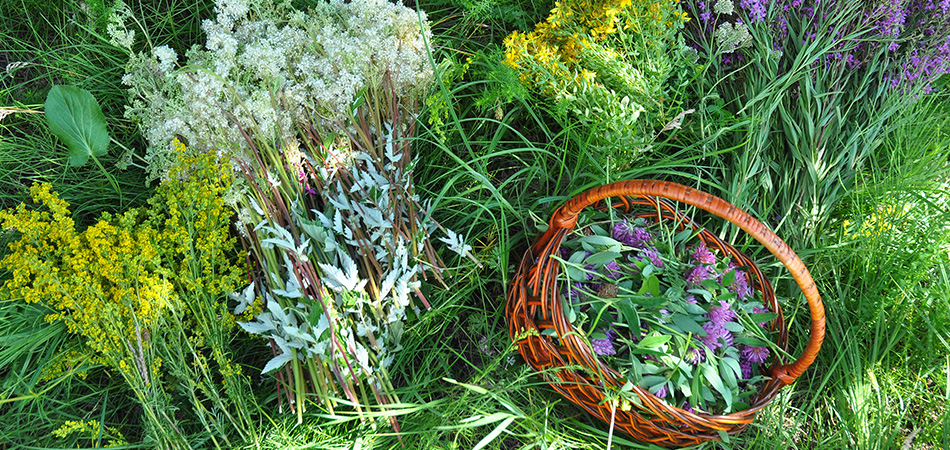 Basket of garden herbs | herbal medicine