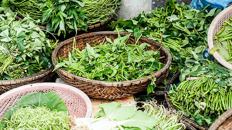 Herbal medicine herbs in baskets