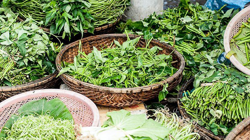 Herbal medicine herbs in baskets