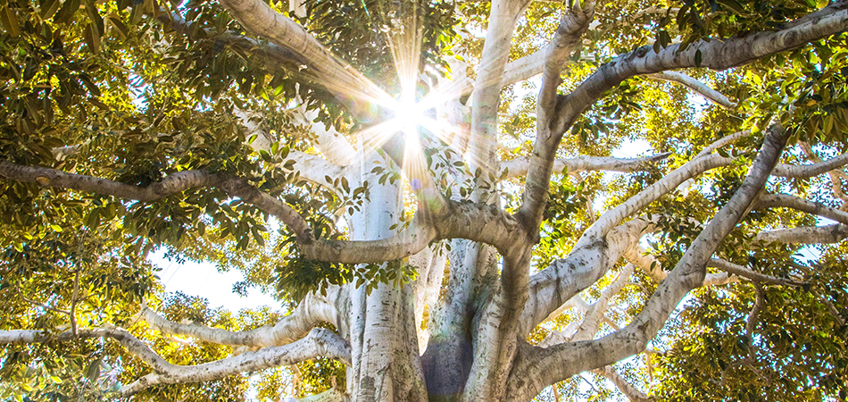 Beautiful tree with sunlight | Ayurveda