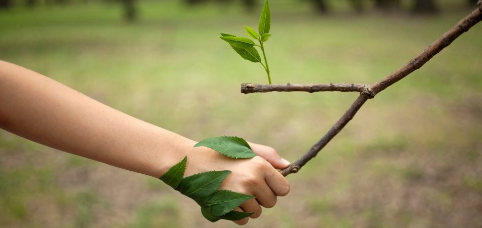 Woman holding hands with a branch | natural anxiety remedy